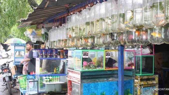 Akibat Pemadaman Listrik, Penjual Ikan Hias Depok Rugi Jutaan Rupiah